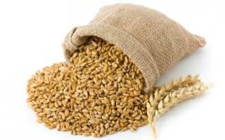 Брага из пшеницы для самогона: рецепты, способы, технология приготовления