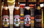 Пиво Гамбринус (Gambrinus): что из себя представляет алкогольный напиток, где можно выпить