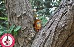 Коньяк Мартель (Martell): обзор напитка, цена и отзывы покупателей